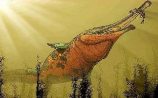 锯齿螈是什么动物:史前最大的两栖动物,长度可达9米