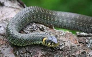 蛇的七寸是指什么部位?