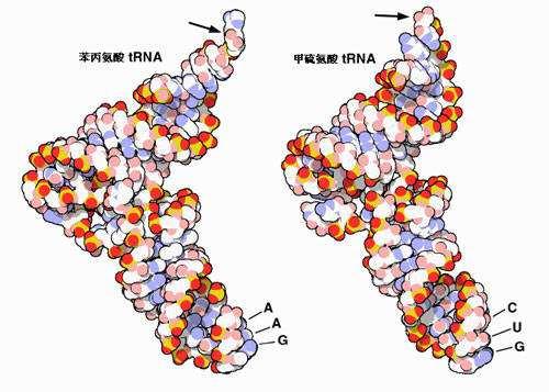 一项新的研究发现陨石中含有RNA成分-第1张图片-IT新视野