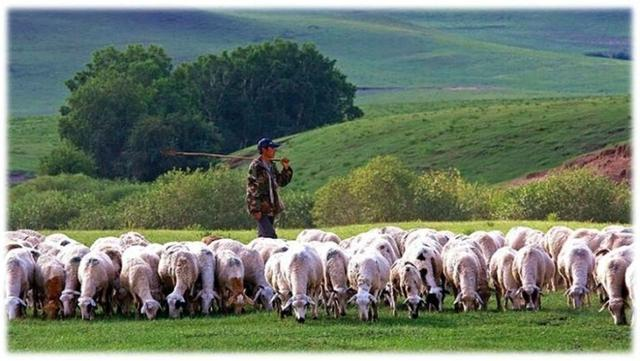 蒙古国送的羊什么时候来?蒙古国送的羊什么时候来-第1张图片-IT新视野