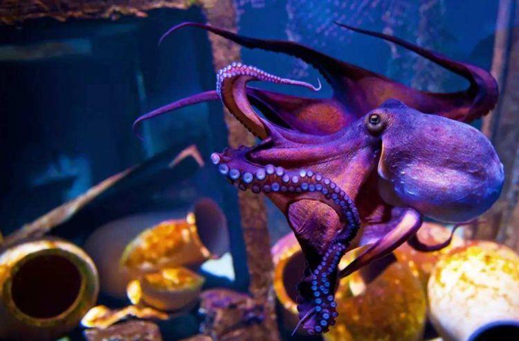 为什么科学家认为章鱼应该是外星生物?看完之后感觉还挺有道理的-第1张图片-IT新视野