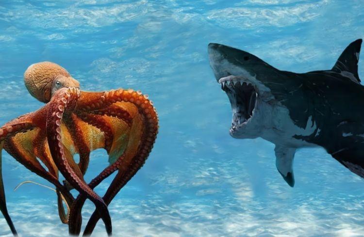 为什么科学家认为章鱼应该是外星生物?看完之后感觉还挺有道理的-第2张图片-IT新视野
