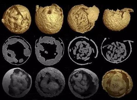 """一群远古化石揭开了""""先有鸡还是先有蛋""""这一千古谜题-第2张图片-IT新视野"""
