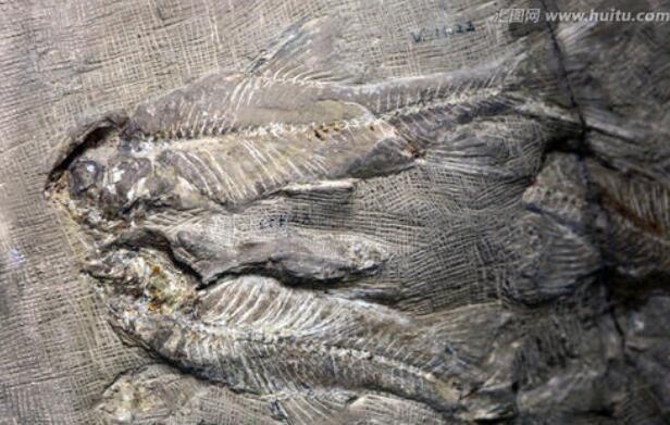 """人是由""""鱼""""进化来的?科学家:3.8亿年前爬上岸的鱼改变了一切-第2张图片-IT新视野"""