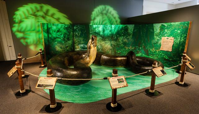 恐龙灭绝之后的地球主宰者,以食用鳄鱼为生,后代仍存活于世-第1张图片-IT新视野