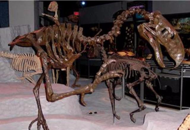 """恐龙灭绝后的统治者,地球最后的""""鸟皇帝""""——恐鹤-第3张图片-IT新视野"""