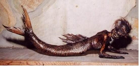 日本人活吃美人鱼图片,美人鱼是否真的存在-第3张图片-IT新视野