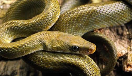 家里进蛇有什么预兆-第1张图片-IT新视野