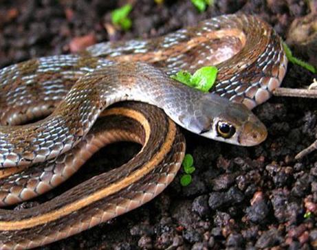 家里进蛇有什么预兆-第2张图片-IT新视野
