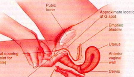 美女的阴道:图解健康的女性私处长什么样-第4张图片-IT新视野