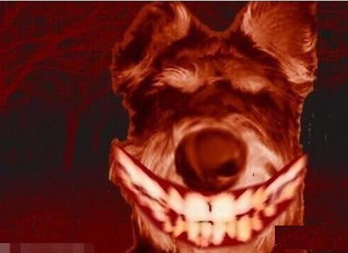微笑狗为什么吓人,血淋淋的狗头让人毛骨悚然-第1张图片-IT新视野
